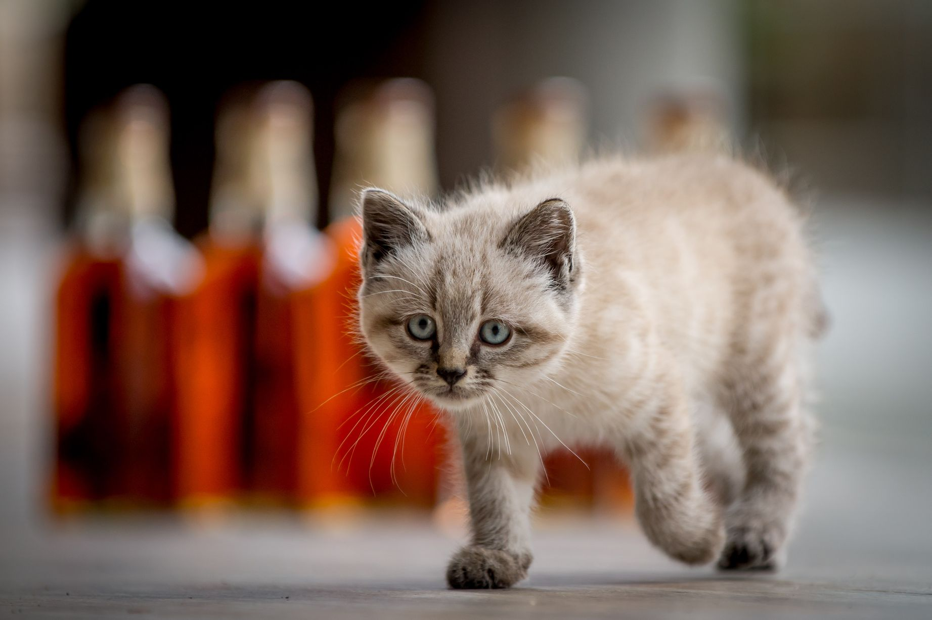 Unusual Jobs in Whiskey Industry-mouser
